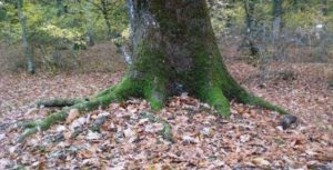 Un albero