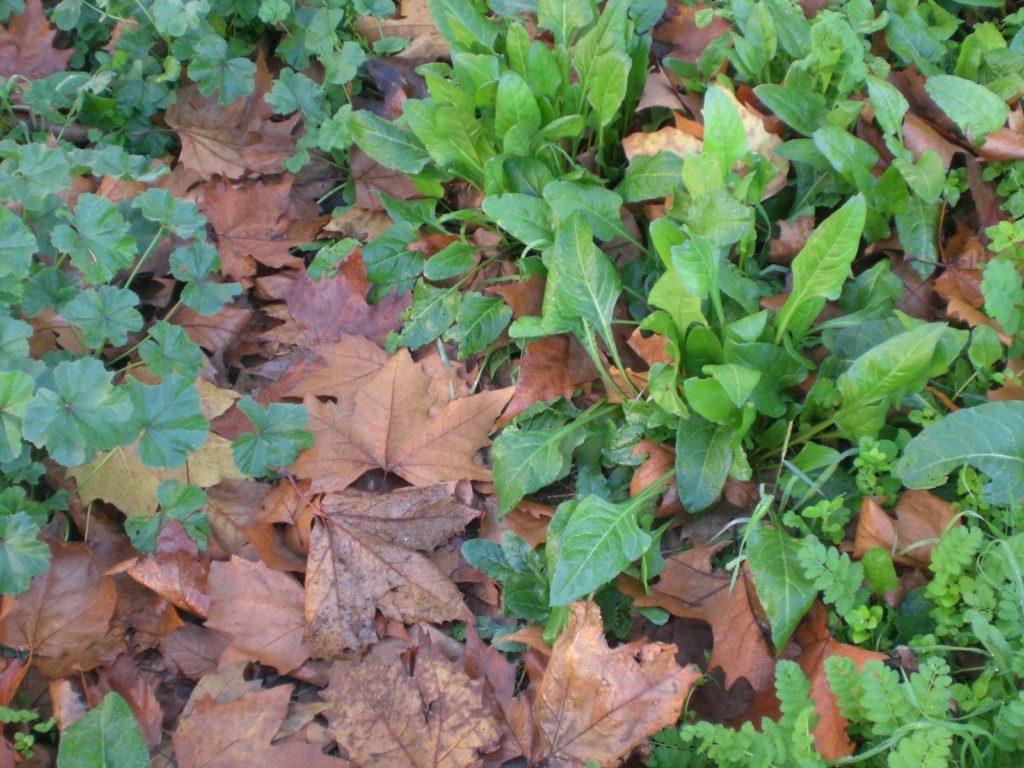 Non sappiamo più vivere, nel verde. Cibarsi di foglie morte è diventato più facile, in qualunque stagione. Che cosa ha smesso di funzionare?