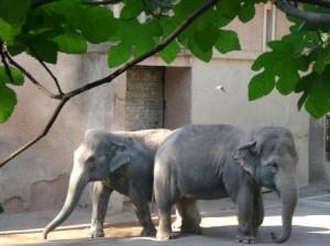 Il ricordo di un elefante nella vostra libreria