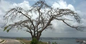 I giorni dell'albero spoglio